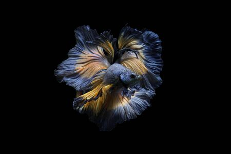 Concept design. Powerful Images that showcase the graceful movements of betta fish thailand.