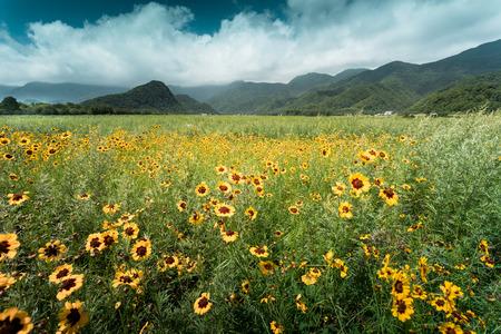 Meadow field of flowers Stock Photo