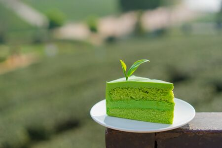 Japanese matcha green tea cake with tea farm background