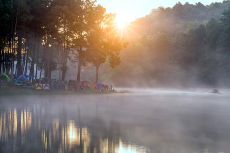 松樹森林日出時的野營和帳篷在蓬鬆松林公園,龐龐宏頌在泰國清邁附近 版權商用圖片