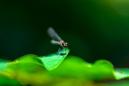 Стрекоза на листе в тропическом лесу.