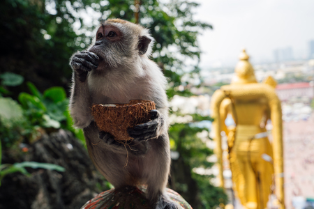 Monkey at Batu Caves Lord Murugan Statue and entrance at Hindu Temple near Kuala lumpur Malaysia Stock Photo