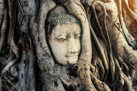 Buddha Head statue with trapped in bodhi tree roots at Wat Maha That temple at Ayutthaya historical park, Ayutthaya province near Bangkok Thailand. 스톡 콘텐츠
