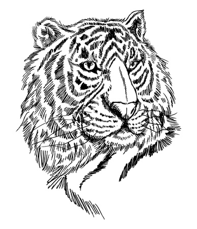 sketch tiger Stock Vector - 8487122