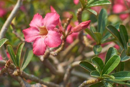 shrub: Tropical flowering shrub