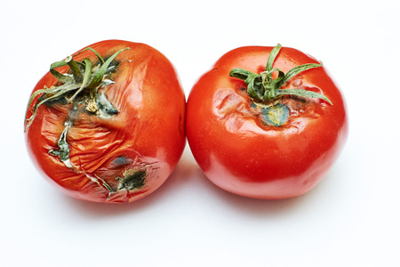 spoiled tomatoes with green tails on an isolated background Foto de archivo