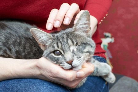 stroking: girl stroking the one-eyed cat gray Stock Photo