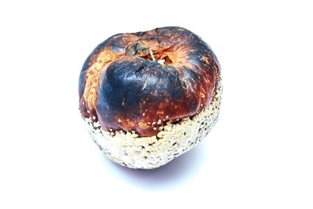 Rotten apple isolated on white background. Stock Photo