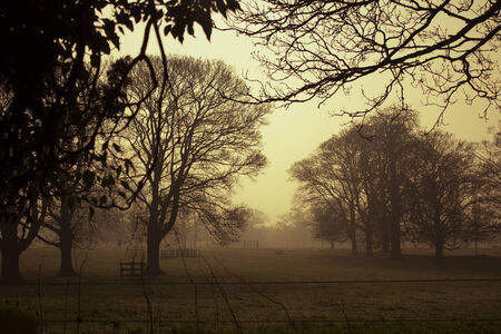 Golden dawn in winter, hazy mist and silhouettes of leafless trees