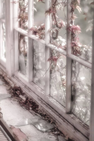 window panes: Soft focus on a wooden window frame with broken window panes and pink flower creeper plant breaking in. Dead leaves lay on the window sill next to broken glass. Stock Photo
