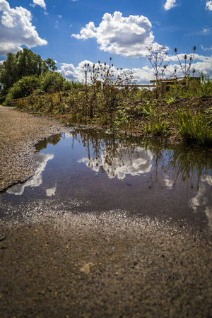 Green trees, blue sky and fluffy white clouds reflecting in a puddle