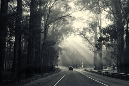 fog forest: Road to Lake Mountain.