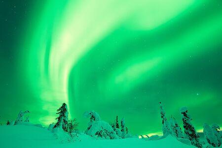 northern lights: Aurora Borealis Northern Lights and snowy trees Stock Photo