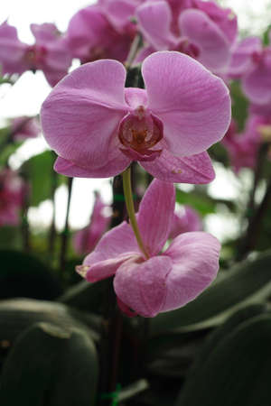 Orchid in flowers gallery of thailand