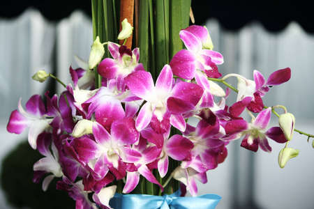 Orchid on Pandan leaves Stock Photo