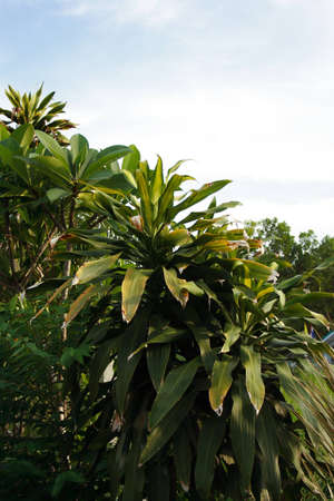 Green leaves garden