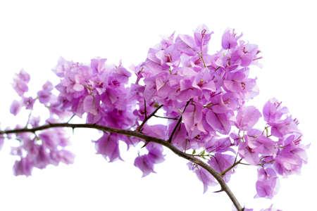 ornamental horticulture: Paper flower