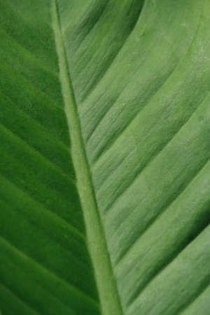 Closeup on green leaf
