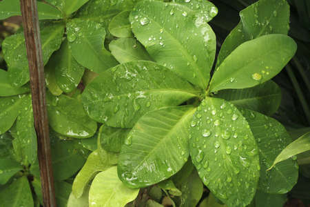 Raindrop on leaf Stock Photo