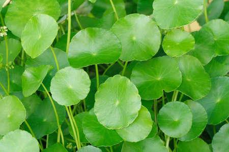 Round leaves plant