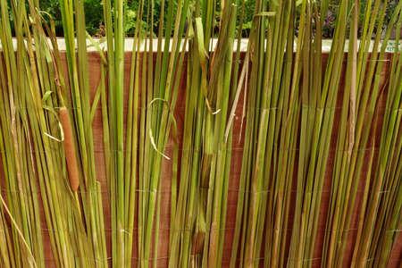 Fence made of plant closeup