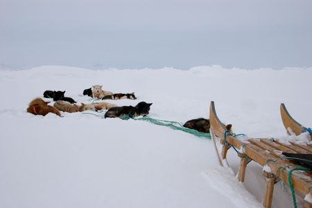 inuit: An inuit dog sledge in snow Stock Photo
