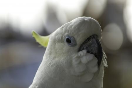black eyes: Foto pappagallo colori penetranti occhi neri, lunghi Waupaca chiaro Archivio Fotografico