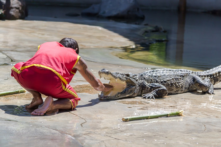 Crocodile show at crocodile farm on NOVEMBER 3, 2013 in Samutprakarn,Thailand. This exciting show is very famous among among tourist and Thai people
