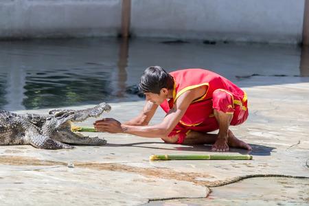 samutprakarn: Crocodile show at crocodile farm on NOVEMBER 3, 2013 in Samutprakarn,Thailand. This exciting show is very famous among among tourist and Thai people