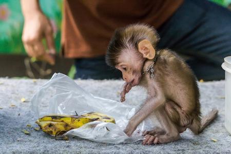 female nipple: Monkey Forest bambino naughtily