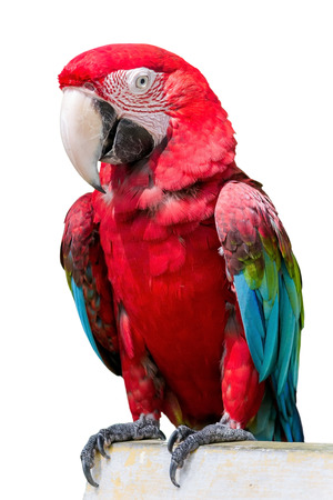 Beautiful Scarlet Macaw Bird with bare feet isolated on white background photo