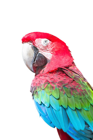 green winged macaw: Beautiful Scarlet Macaw Bird with bare feet isolated on white background