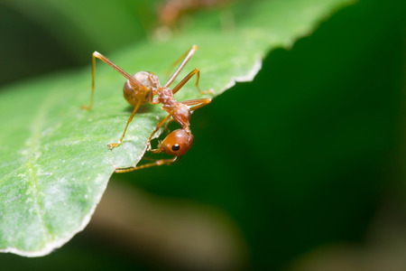 Ant walking to Foraging on a branch. photo