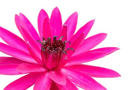 Lotus. Blume Schöne Lotus. Isolierten Weißen Hintergrund ...