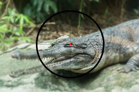 Crocodile on the shooting range Imagens