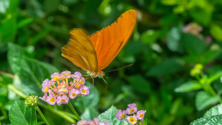Orange Butterfly Standing on Yellow and Pink Flower Stock Photo