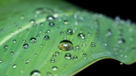 rain drop on leaf. on black background 版權商用圖片