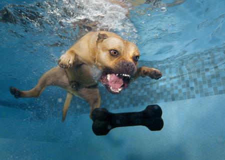 Perro saltando bajo el agua en el juguete Foto de archivo - 106131615