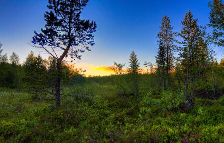 northern nature: Beautiful Northern nature at sunset in summer