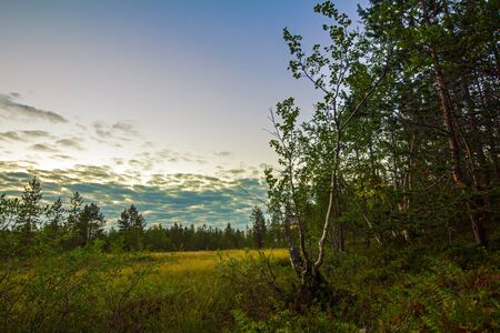 northern nature: Northern nature in summer.Arctic landscape