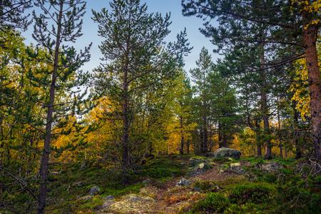 jungle scene: Bright autumn colors in the Arctic tundra Stock Photo
