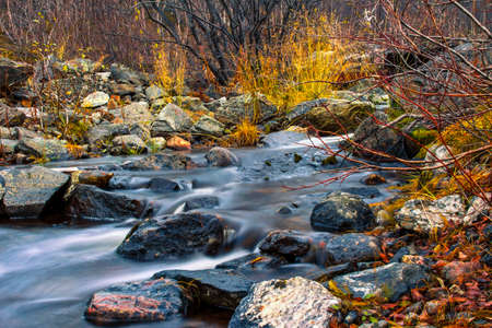 tundra: Stream flows in the autumn tundra