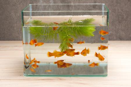 木製のテーブルの上の魚タンク