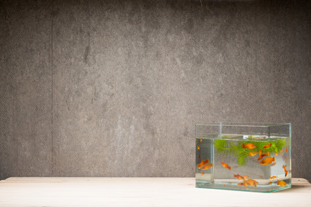 tetra fish: fish tank on table wooden