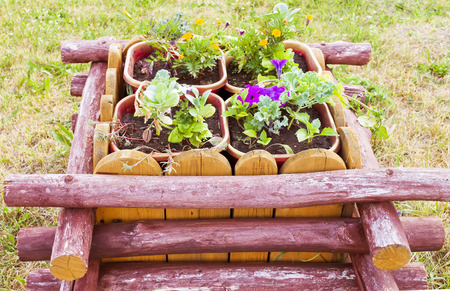 well maintained: the design of the cultivation of garden flowers in a wooden tub
