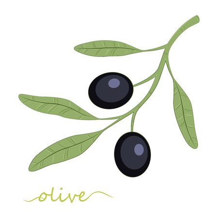 Olive tree. Olive oil. Black olives. Vector illustration.