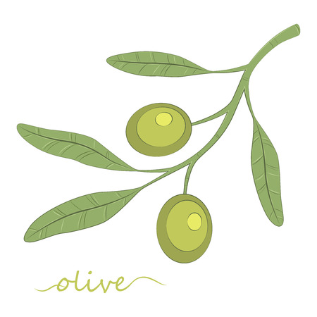 Olive tree. Olive oil. Green olive. Vector illustration.