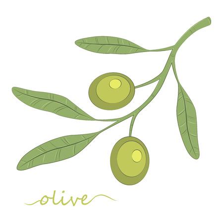 Olive tree. Olive oil. Green olive. Vector illustration.
