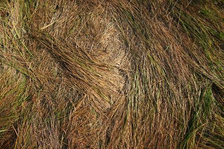 haulm: flatten haulm on the ground