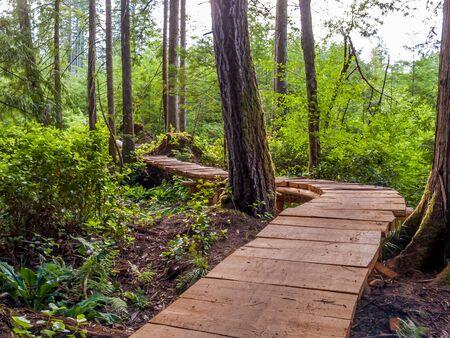 Wooden path through forest